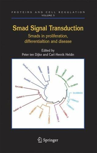 Smad signal transduction by